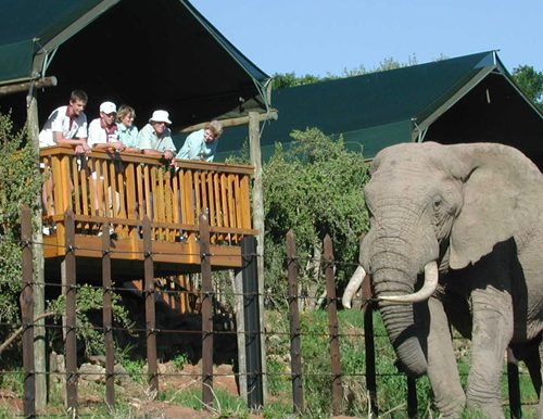 An elephant being viewed on a safari trip won at a fundraising auction